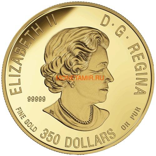 Канада 350 долларов 2019 Пума Портреты Дикой Природы (Canada 350$ 2019 Cougar Wildlife Portraits 35 gr Gold Proof Coin).Арт.1295EK1.432600E/75 (фото, вид 1)