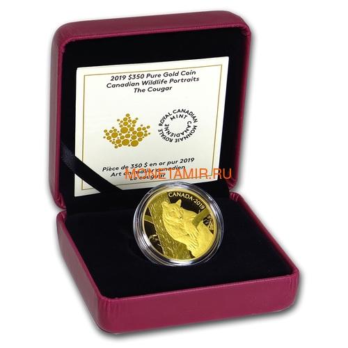Канада 350 долларов 2019 Пума Портреты Дикой Природы (Canada 350$ 2019 Cougar Wildlife Portraits 35 gr Gold Proof Coin).Арт.1295EK1.432600E/75 (фото, вид 2)