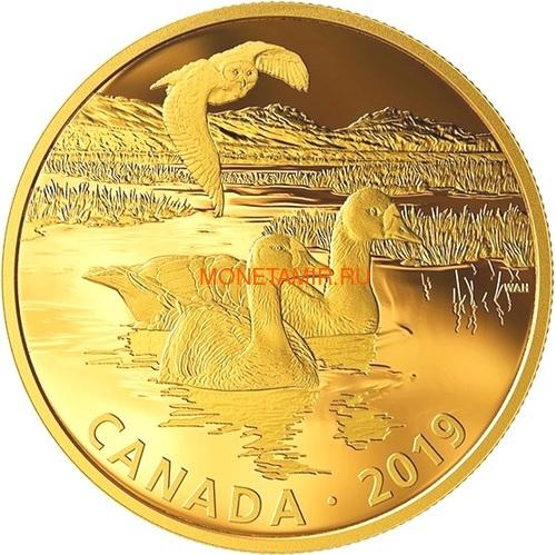 Канада 30 долларов 2019 Касатка и Морские Львы Хищник и Добыча (Canada 30$ 2019 Predator and Prey Orca and Sea Lions 2 oz Gold Plated Silver Coin).Арт.65 (фото, вид 5)