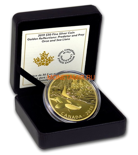 Канада 30 долларов 2019 Касатка и Морские Львы Хищник и Добыча (Canada 30$ 2019 Predator and Prey Orca and Sea Lions 2 oz Gold Plated Silver Coin).Арт.65 (фото, вид 2)