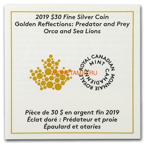 Канада 30 долларов 2019 Касатка и Морские Львы Хищник и Добыча (Canada 30$ 2019 Predator and Prey Orca and Sea Lions 2 oz Gold Plated Silver Coin).Арт.65 (фото, вид 3)