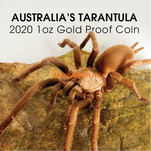 Ниуэ 100 долларов 2020 Тарантул Паук серия Смертельно Опасные (Niue 2020 $100 Tarantula Deadly & Dangerous 1oz Gold Proof Coin)Арт.88 (фото, вид 5)