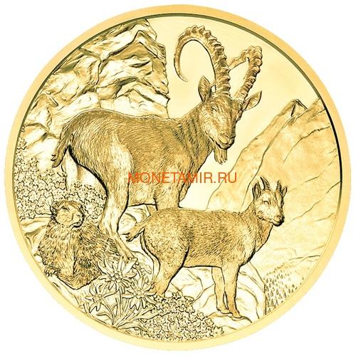 Австрия 100 евро 2013-2018 Дикая Природа Красный Олень Кабан Глухарь Лиса Горный Козел Утка Набор 6 монет (Austria 100E Wildlife in our Sights Gold Coin Set).Арт.92 (фото, вид 12)