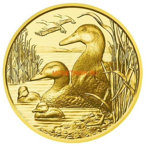 Австрия 100 евро 2013-2018 Дикая Природа Красный Олень Кабан Глухарь Лиса Горный Козел Утка Набор 6 монет (Austria 100E Wildlife in our Sights Gold Coin Set).Арт.92 (фото, вид 14)