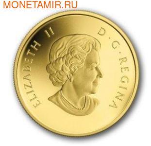 Канада 5 долларов 2013. Бобр (фото, вид 1)