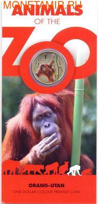 Серия «Животные зоопарка. Орангутанг» (фото, вид 2)