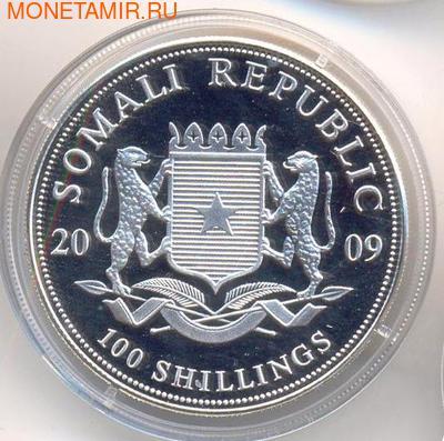 Слон. Сомали 100 шиллингов 2009. (фото, вид 1)