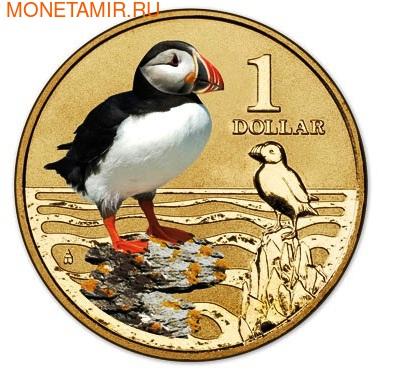 Австралия 1 доллар 2013. Атлантический пуффин (фото, вид 1)