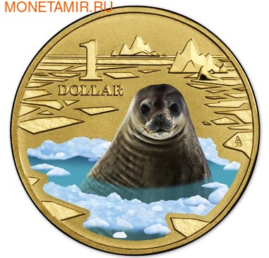 Австралия 1 доллар 2013. Тюлень Уэдделла (фото, вид 1)