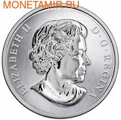 Канада 25 центов 2013. Эхинацея пурпурная и бабочка (фото, вид 1)
