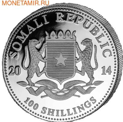 Сомали 100 шиллингов 2014. Слоны. (фото, вид 1)