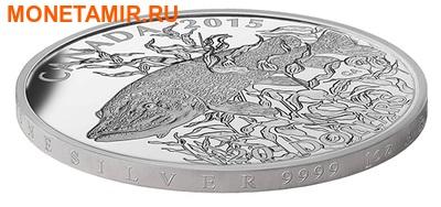 Канада 20 долларов 2015.Североамериканская спортивная рыбалка - Щука. (фото, вид 1)