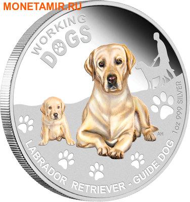 Тувалу 1 доллар 2010.Лабрадор-ретривер серия Служебные собаки.Арт.000579742202/60 (фото, вид 1)