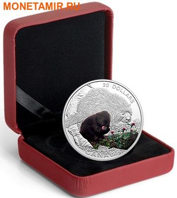 Канада 20 долларов 2016.Маленький дикобраз – Детеныши животных.Арт.60 (фото, вид 2)