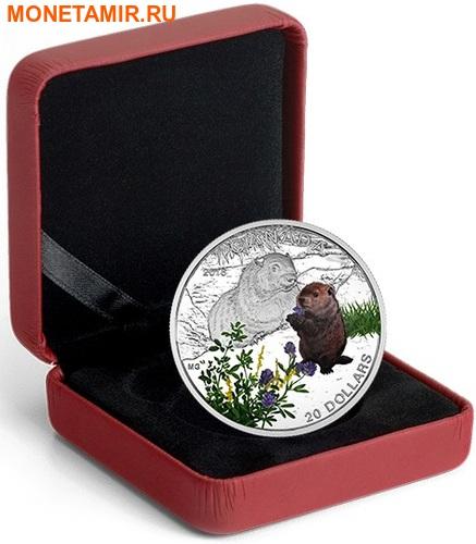 Канада 20 долларов 2016.Сурок – Детеныши животных.Арт.60 (фото, вид 2)