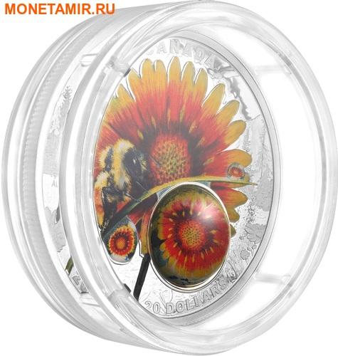 Канада 20 долларов 2017 Шмель (Пчела) цветок Дейзи серия Красота под солнцем (3D капля).Арт.60 (фото, вид 2)