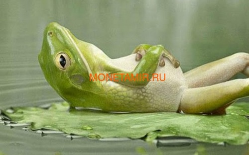 Палау 2 доллара 2013 Коралловопалая Литория серия Мир Лягушек (Palau 2$ 2013 Litoria Caerulea World of Frogs).Арт.000202848905/60 (фото, вид 4)