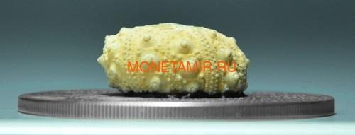 Буркина Фасо 1000 франков 2017 Морские Ежи – Мир эволюции (Burkina Faso 1000FCFA 2017 Echinoidea Fossil Sea Urchin World of Evolution).Арт.60 (фото, вид 1)