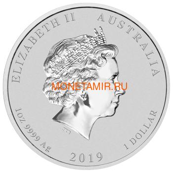 Австралия 1 доллар 2019 Год Свиньи Лунный Календарь (Australia 1$ 2019 Year of the Pig Lunar).Арт.69 (фото, вид 1)