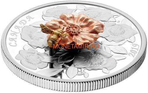 Канада 50 долларов 2019 Шмель Цветок Роза (Canada 50$ 2019 Bumble Bee and the Bloom Silver Coin 5oz).Арт.69 (фото, вид 3)