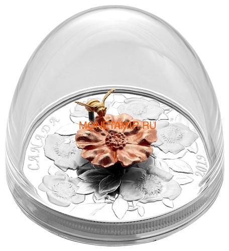 Канада 50 долларов 2019 Шмель Цветок Роза (Canada 50$ 2019 Bumble Bee and the Bloom Silver Coin 5oz).Арт.69 (фото, вид 6)