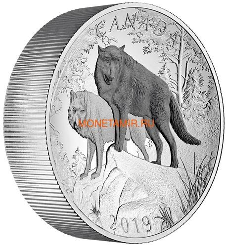 Канада 100 долларов 2019 Волки Величие Природы Выпуклая Двойная Толщина (Canada 100$ 2019 Wolves Nature's Grandeur Series Piedfort Concave 10 oz Silver Coin).Арт.67 (фото, вид 1)