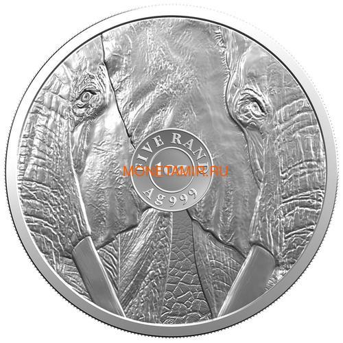 Южная Африка 5 рандов 2019 Слон Большая Африканская Пятерка (South Africa 5R 2019 Elephant Big Five 1 oz Silver Coin) Блистер.Арт.67 (фото, вид 1)