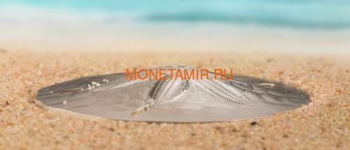 Палау 1 доллар 2019 Песочный Доллар II (Palau 1$ 2019 Sand Dollar II).Арт.67 (фото, вид 2)