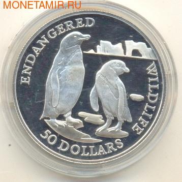 Пингвины (фото)