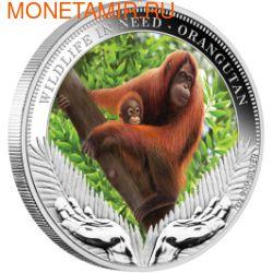 Тувалу 1 доллар 2011.Орангутанг серия Дикая природа в опасности.Арт.60 (фото)