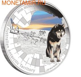 "Австралия 1 доллар 2010. Австралийские Антарктическиее территории: ""Хаски"". (фото)"