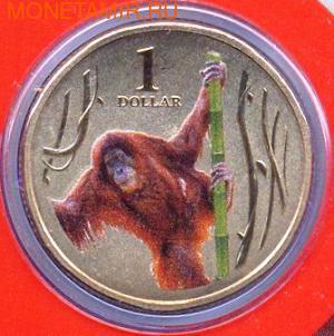 Серия «Животные зоопарка. Орангутанг» (фото)