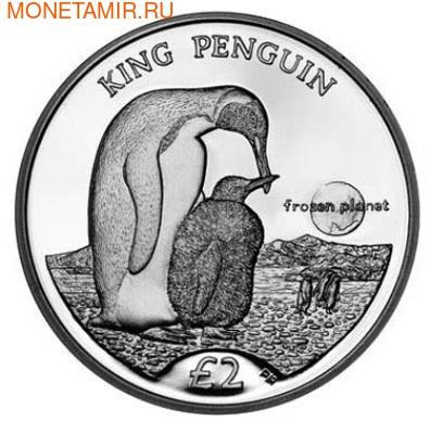 Королевский Пингвин. Арт: 000181342772