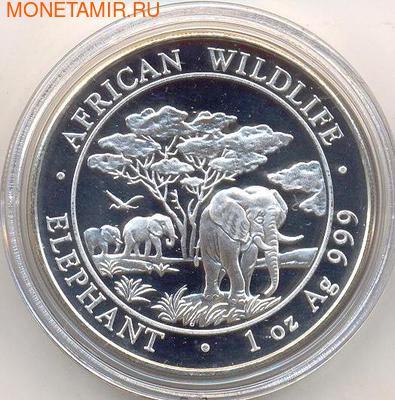Слоны. Сомали 100 шиллингов 2012. (фото)