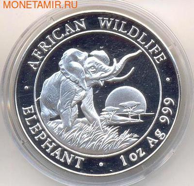 Слон. Сомали 100 шиллингов 2009. (фото)