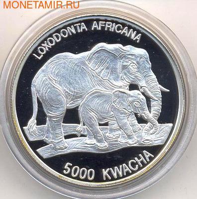 Слоны. Замбия 5000 квача 1999. (фото)