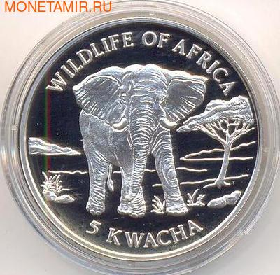 Слон. Малави 5 квачей 1997. (фото)