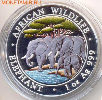 Слоны. Сомали 100 шиллингов 2013. (фото)