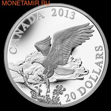 Канада 20 долларов 2013. Белоголовый орлан: Возвращение с охоты (фото)