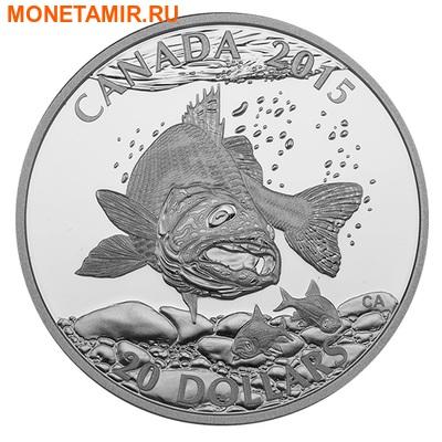 Канада 20 долларов 2015.Североамериканская спортивная рыбалка - Судак. (фото)