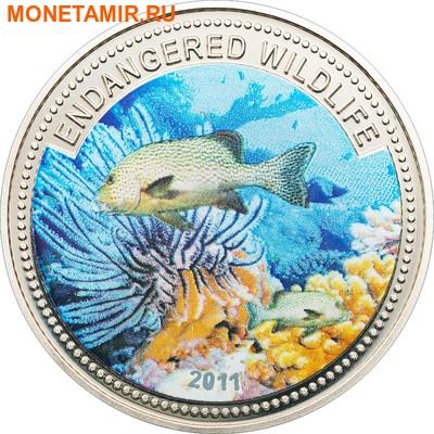 Палау 1 доллар 2011.Рыба Медный Морской Окунь (Copper Rockfish) – Под угрозой исчезновения.Арт.0400280313/60 (фото)