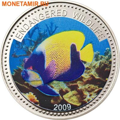 Палау 1 доллар 2009.Рыба Ангел навархус (Blue-girdled Angelfish) – Под угрозой исчезновения.Арт.60 (фото)
