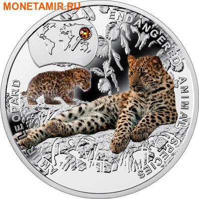 Ниуэ 1 доллар 2014.Амурский Леопард – Вымирающие виды животных.Арт.000465249785/60 (фото)