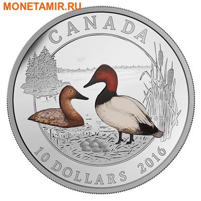 Канада 10 долларов 2016.Парусиновый нырок серия Утки Канады.Арт.60 (фото)