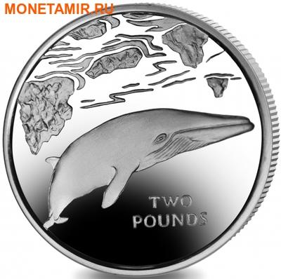 Южная Георгия и Южные Сендвичевы острова 2 фунта 2016.Кит – малый полосатик (C-N).Арт.60 (фото)