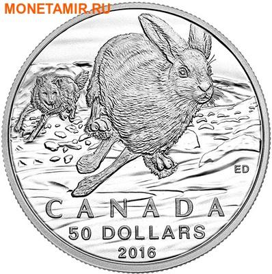 Канада 50 долларов 2016.Заяц (Блистер).Арт.60 (фото)