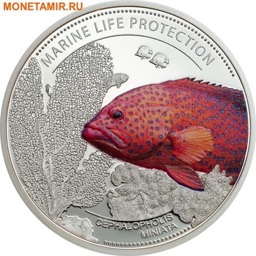 Палау 1 доллар 2016.Рыба Красный коралловый групер (Cephalopholis miniata) – Защита морской жизни.Арт.60 (фото)