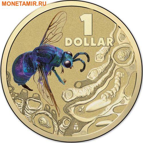 Австралия 1 доллар 2014.Оса – Яркие жуки (Блистер).Арт.000086253568/60 (фото)