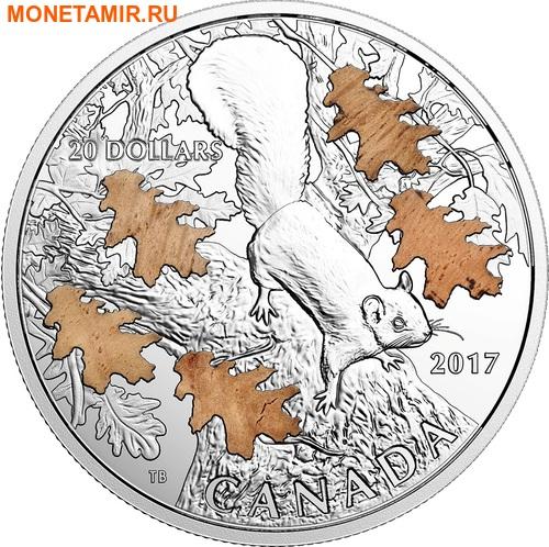 Канада 20 долларов 2017 Белка с дубовыми листьями.Арт.000439353939/60 (фото)