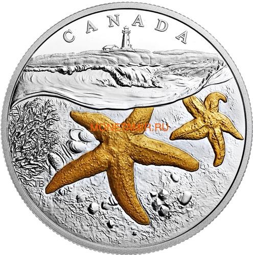 Канада 20 долларов 207 Атлантическая морская звезда Маяк (Canada 20C$ 2017 From Sea To Sea Atlantic Starfish).Арт.60 (фото)